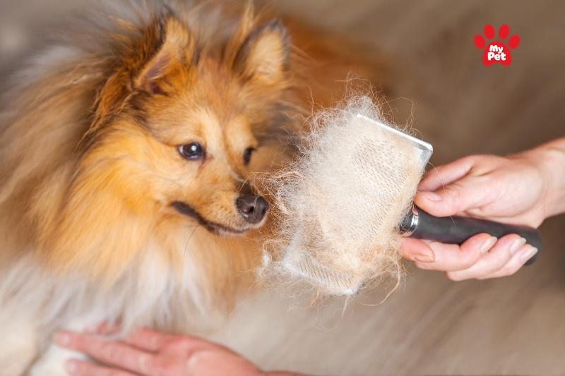 Chải lông cho thú cưng