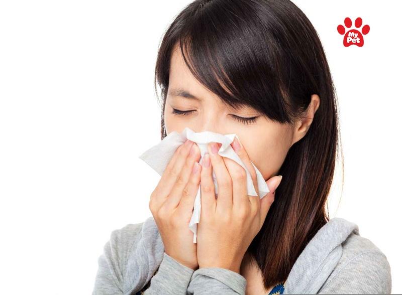 Hắt hơi, sổ mũi là những triệu chứng của dị ứng