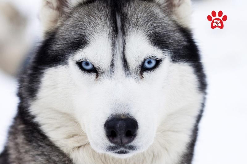Đôi mắt hình quả hạnh nhân có phần hơi đáng sợ