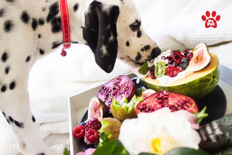 thực phẩm cho chó